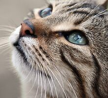A Tabby Cat Looks Up by simpsonvisuals
