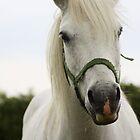 White Beauty by Gemma  Simpson