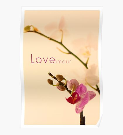 Orchid Love/Amour Poster