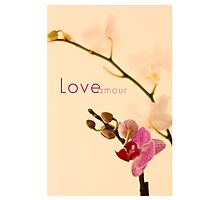 Orchid Love/Amour Photographic Print