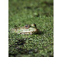 Swamp Goblin Photographic Print