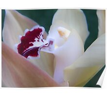 Lovely Orchid Poster