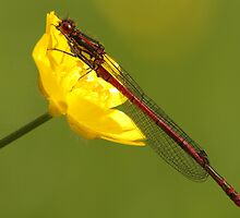 Red & Yellow by Robert Abraham