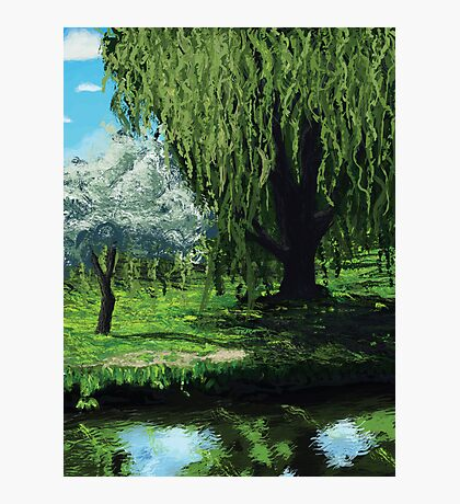 Waterside Willow Photographic Print