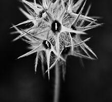 spikehead by Ralph  Weidne