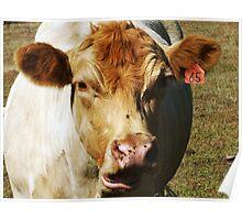 Asymmetrical Bovine Poster