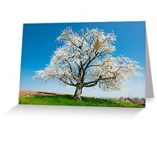 blossoming tree in spring Greeting Card