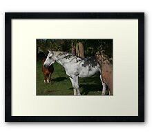 Shadow  And Shade Framed Print
