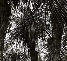 Palm Trees, Elba by itchingink