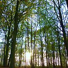 Normanby Woodland by SweetLemon