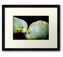 Love is in the air (1) 0823 Framed Print