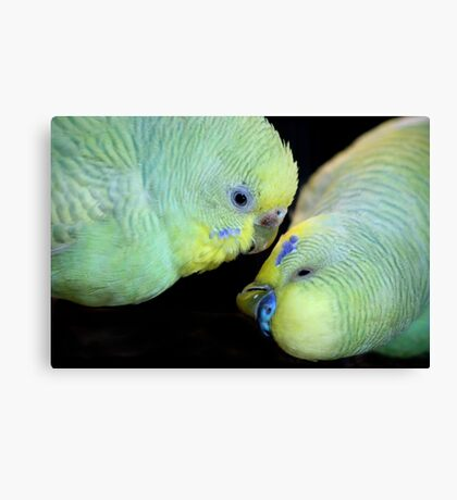 Love is in the air (2) 0836 Canvas Print
