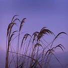 Blowing in the Wind by sarnia2