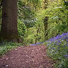 Bluebell Walk, West Malvern by LisaRoberts