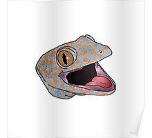 tokay gecko Poster