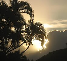 A Good Frond Sees Your Silver Lining by ronholiday