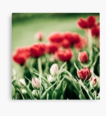 Spring... Canvas Print