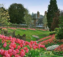 Pink Spring by Lisa Williams