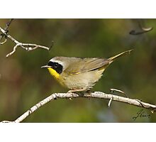 Male Common Yellowthroat Warbler 01 Photographic Print