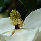 The Heart of a Magnolia by Lee Hiller-London