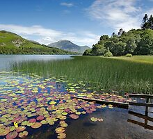 Loweswater Lake shore in summer from Holme Wood English Lake District by Martin Lawrence