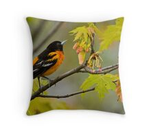 Northern Oriole looking for supper - Ottawa, Ontario Throw Pillow