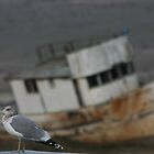 mystery abandoned trawler Point Reyes by fototaker