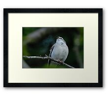 Sing.  Sing a song. Framed Print