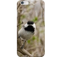 Black Capped Chickadee - Mud Lake, Ottawa, Ontario iPhone Case/Skin