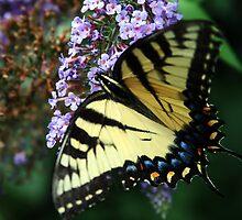 butterfly in spring by orion plexus