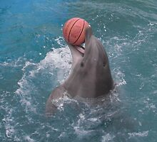 Dolphin Bball by stephanieunton