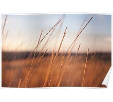 Scenic Photo of Wheat Field Poster