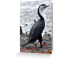 Watch the birdie Greeting Card