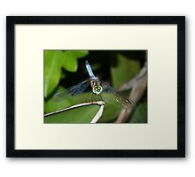 Mixed-eye color dragonfly Framed Print