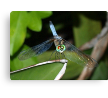 Mixed-eye color dragonfly Canvas Print