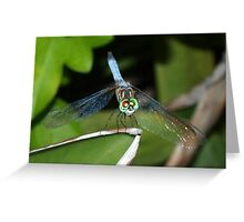 Mixed-eye color dragonfly Greeting Card