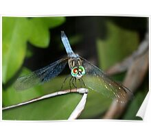Mixed-eye color dragonfly Poster