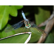 Mixed-eye color dragonfly Photographic Print
