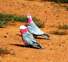 Two old Galahs by EdsMum