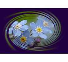 Forget-Me-Not with Decorative Border Greeting Card Photographic Print
