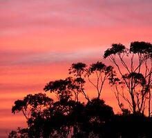 Jindivick Sunset by Gabi Cumming