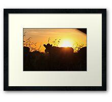 Sunset Cows Framed Print