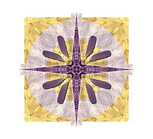 Summer Compass Photographic Print