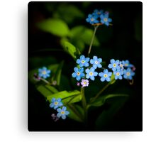 Forget Me Nots...please Canvas Print