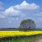 Amongst the rapeseed by Antonio  Luppino