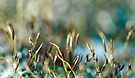 Moss abstract by Anne Staub