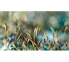 Moss abstract Photographic Print