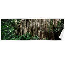 Giant Strangler Fig Poster