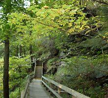 Along a trail at Mill Creek Park by atomicseasoning
