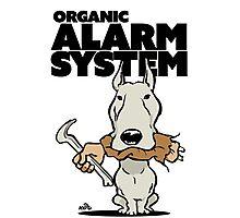 Pitbull alarm system cartoon Photographic Print